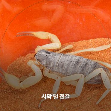할로윈 거미 곤충 특별전 이미지
