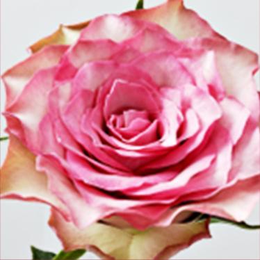 핑크하트 이미지