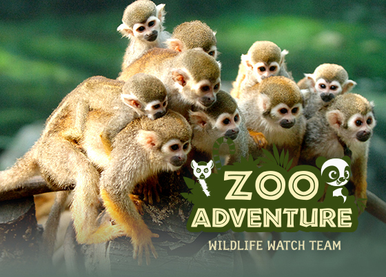 zoo 어드벤처