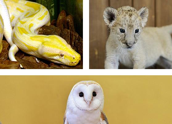 나이트 zoo 탐험대