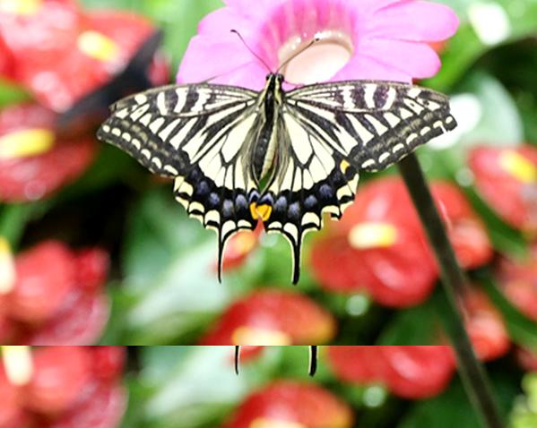 나비 이미지