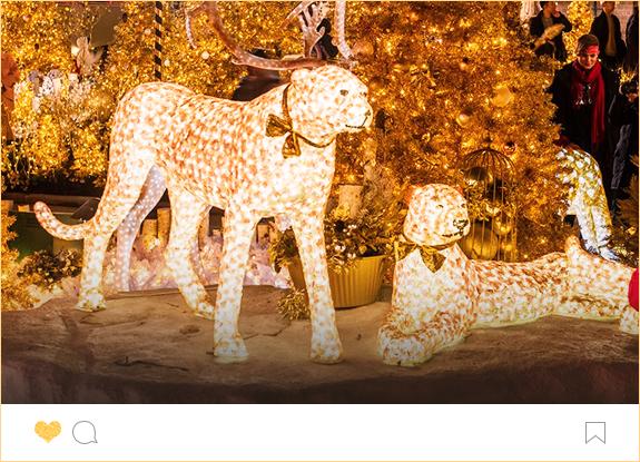 별빛 동물원 이미지